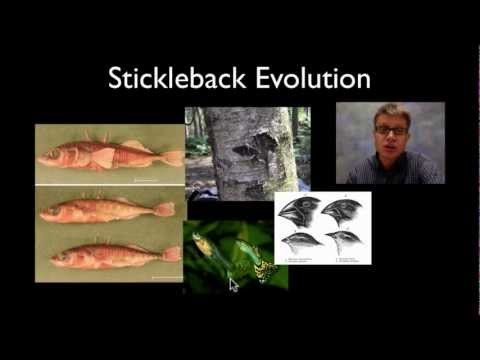 Stickleback Evolution