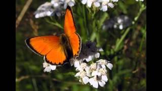 Insekter, Djur, Blommor från vår lilla By Rullbo i Hälsingland