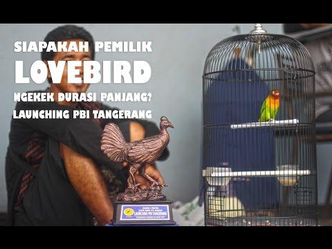 Siapakah Pemilik LOVEBIRD Ngekek Durasi Panjang Di Launching PBI TANGERANG??