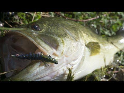 Big Largemouth Bass On The Hellgrammite