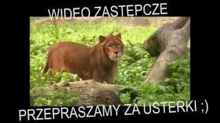 DJ Farad - Mała figlara (audio)