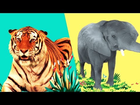 StoryBots   Wild Animal Songs For Kids   Jungle: Lion, Tiger, Rhino   Learning Songs