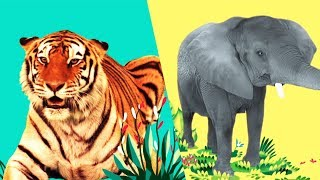 StoryBots | Wild Animal Songs For Kids | Jungle: Lion, Tiger, Rhino | Learning Songs