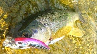 Рыбалка по форели на копию DUO Ryuki против блесны. Ловля форели в горной реке