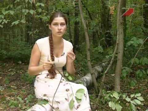 Черемуха, лечение черемухой. Свойства целебных трав