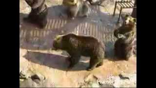 Приколы с медведями!!!