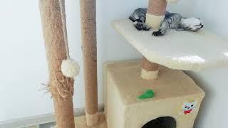 Питомник ориентальных кошек. Содержание котят !!!