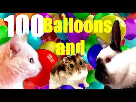 Cat, Rabbit, Hamster and 100 balloons !!!