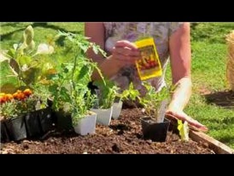 Vegetable Gardening : Compatible Planting of Garden Vegetables