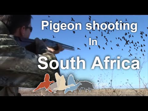 Dove Shooting South Africa £175 per person March to September 2018 United kingdom