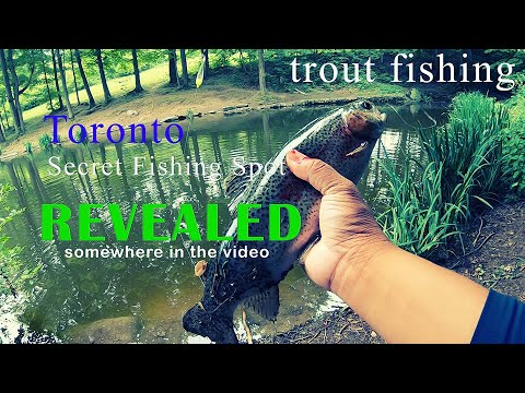 Rainbow Trout Fishing Ontario Secret Spot Revealed In The Video