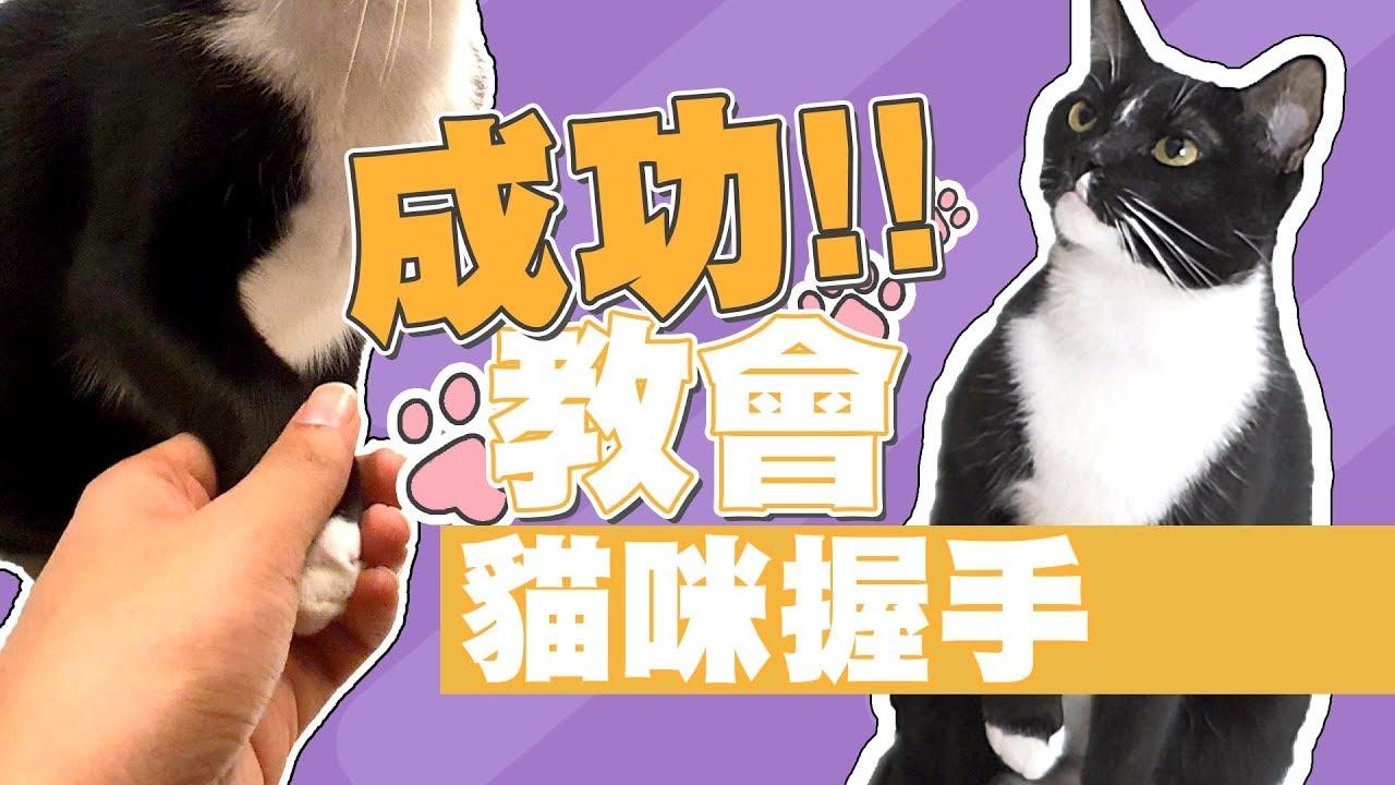[丫妃和兩個太監] 貓咪學會握手!訓練大成功全記錄!