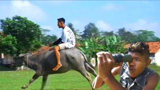 PENUNGGANG KERBAU | Exstrim Lucu The Series | Funny Videos | TRY NOT TO LAUGH . KEMEKEL TV