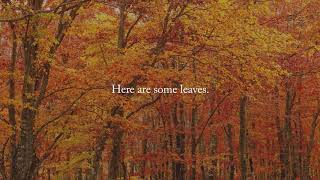 """""""There are Leaves in my Garage"""" Piece for Solo Piano"""