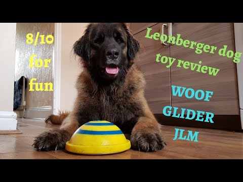 Leonberger dog | toy review woof glider #funnyanimals