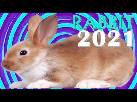 Rabbit Horoscope 2021  ✦  Born 1927, 1939, 1951, 1963, 1975, 1987, 1999, 2011