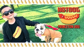 [ Official Hot Dog Song ] Princeton Jou☻ Brand New Kids Songs 2018