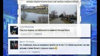 Жители Калининградской области жалуются на « собачьи свадьбы»