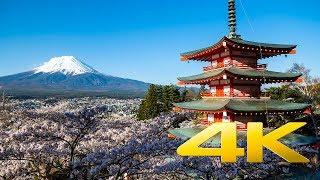 The Cherry Blossoms of Chureito Pagoda - Yamanashi - 忠霊塔 - 4K Ultra HD