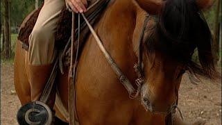 Preciso de ajuda, meu cavalo empina quando tento recuar!