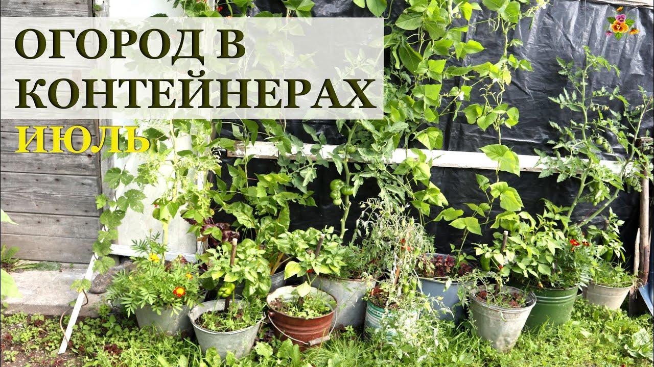 Огород в контейнерах в июле
