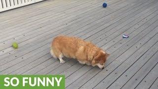 「うちの犬でパックマンをやってみた…」レトロゲーマーなら心ときめく朝食風景(動画)