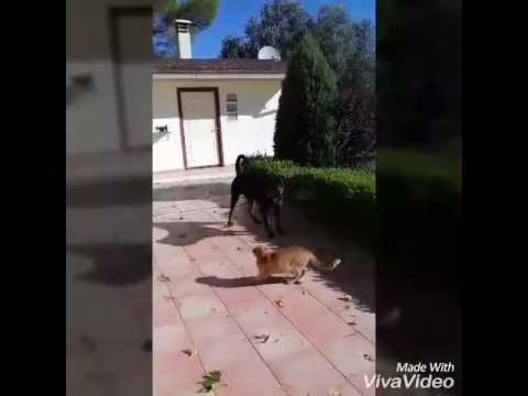 Dog vs cat🐶🐱