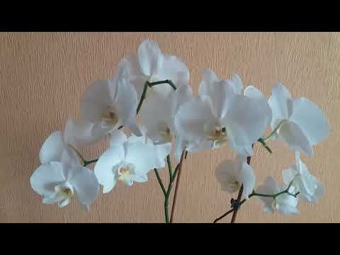 Секреты по уходу сразу после покупки орхидеи | Купили новую орхидею? Что делать?