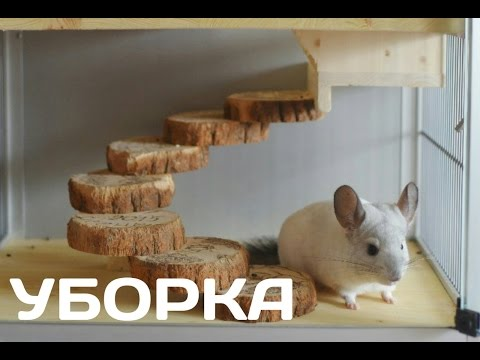 Видео: УБОРКА В ВИТРИНЕ У ШИНШИЛЛЫ.