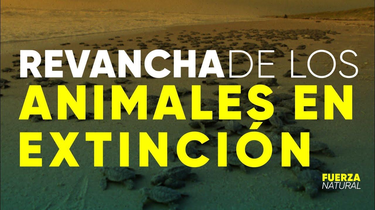LA REVANCHA DE LOS ANIMALES EN EXTINCIÓN: otro lado B de la pandemia