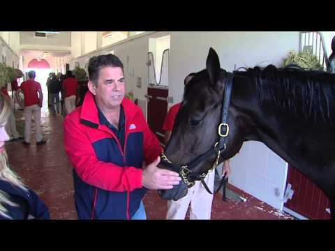 #DubaiRacing- Doug Watson Stable Tour | جولة داخل اسطبل دوج واتسون