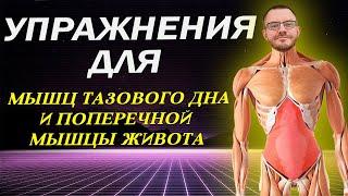 Упражнения Кегеля для мышц тазового дна Профилактика простатита и геморроя Поперечная мышца
