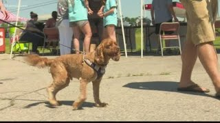 Food bank collects pet food for animals in need