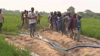 Rice Irrigation Farming In Nigeria