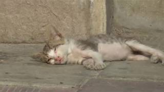 Котёнок на остановке