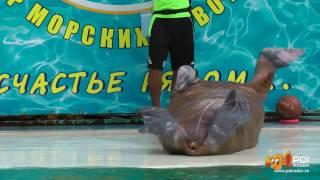 Театр морских животных/ Theatre of marine animals, Yalta, Crimea, Ukraine