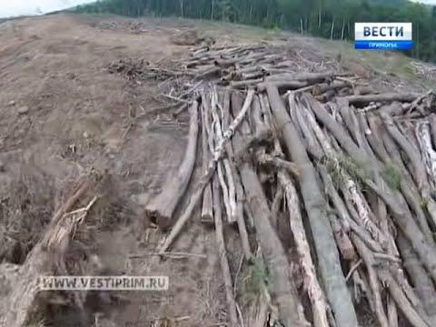 видео: Что ищут китайские геологи в Уссурийской тайге?