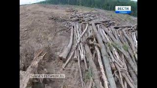 Что ищут китайские геологи в Уссурийской тайге?