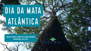 Dia da Mata Atlântica - SOS Floresta do Camboatá - VERDE MAR AO VIVO #20