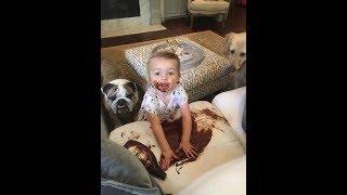 Смешные Видео Приколы с Котами Смешные Коты до Слез Смешные Животные 2019 12