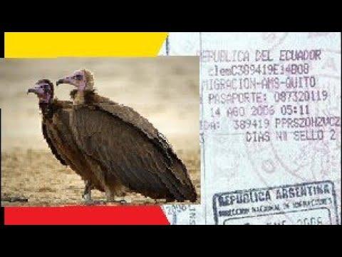 Посольство Эквадора, Визы и стервятники...