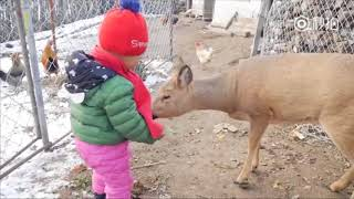 Meet the Chinese boy who grew up with his best friend, a Siberian roe deer!