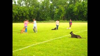 Canine Man And Malo Teaching Obedience Class