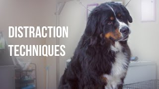 Distraction techniques when grooming your dog