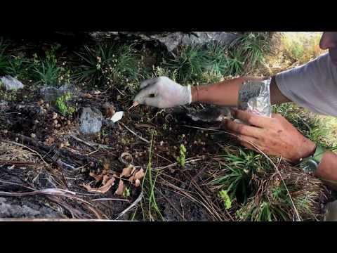 Expedición Chiribiquete Parques Nacionales y Fundación Herencia