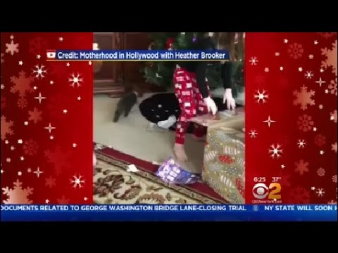 Cat Escapes Gift Box