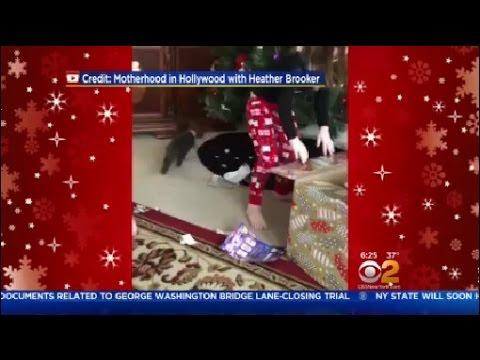 Cat Escapes Gift Box