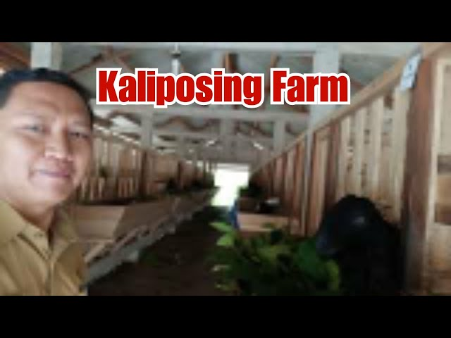 #VLOGBAYU Kaliposing Farm