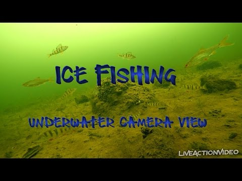 Ice fishing. Underwater camera view