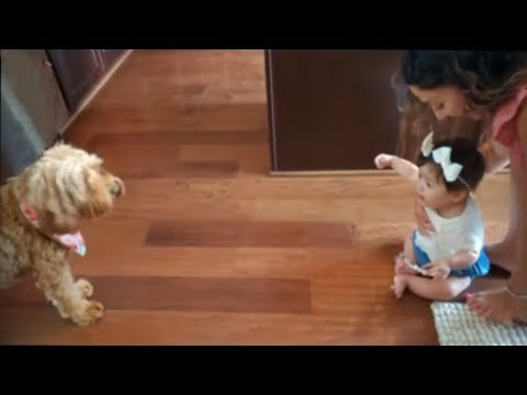 Baby and dog try to communicate with each other
